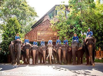 دهکده فیل های پاتایا ( elephant village )
